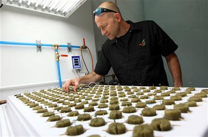 Consultant Jonathan Hunt checks seedlings growing in the marijuana growing facility on the Flandreau Santee Sioux Reservation in September. AP Photo: Jay Pickthorn