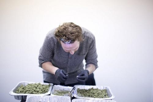 Mikey Deangelo processes flower at Dab Society Extracts in Portland. Image: Beth Nakamura, The Oregonian