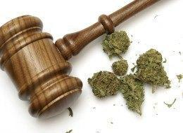 Image of a gavel and marijuana to represent cannabis law