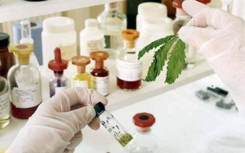 A laboratory analysis of GW Pharmaceuticals' cannabis samples of Sativex. Image: PA via   Telegraph.co.uk