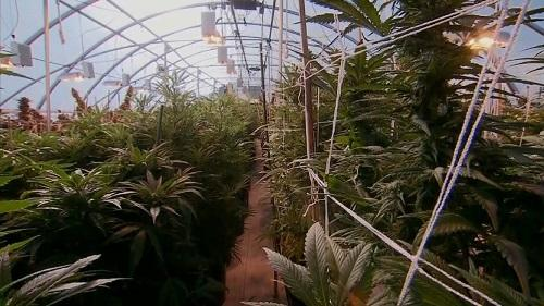 GreenhouseGrowImageKAKEDotCom