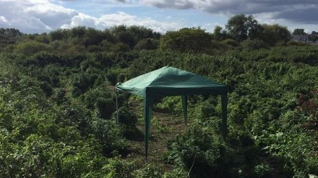 """Officers said the """"small forest"""" of plants covered an area the size of a football pitch and was complete with a gazebo. Image: Met Police via BBC News"""