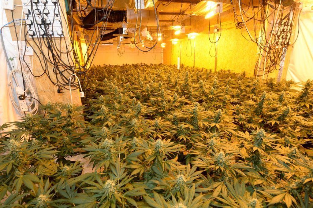 Image of an indoor marijuana grow