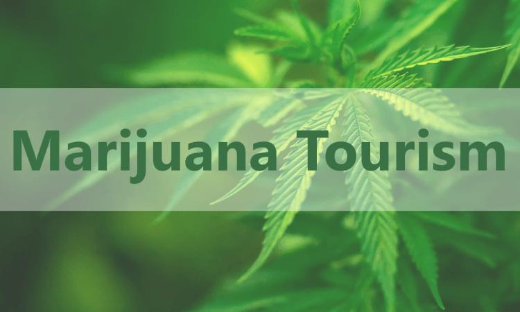 Image of Marijuana Tourism logo