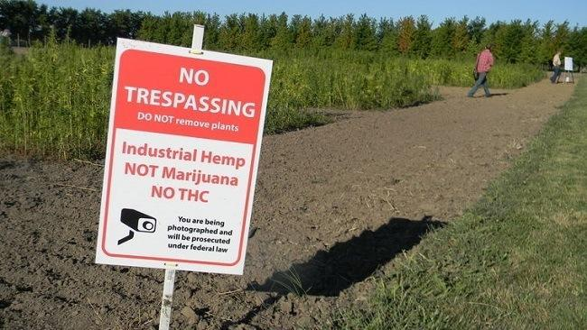 A warning sign at a Purdue University research farm cautions visitors against taking cannabis sativa plants grown for research purposes. Image: Maureen Hayden/CNHI