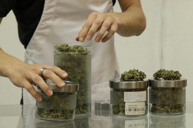 Bear Westerlind, an employee at the medical marijuana dispensary Kaya Shack, displays different types of marijuana flowers sold at the shop in Portland, Ore. (AP Photo/Gosia Wozniacka)