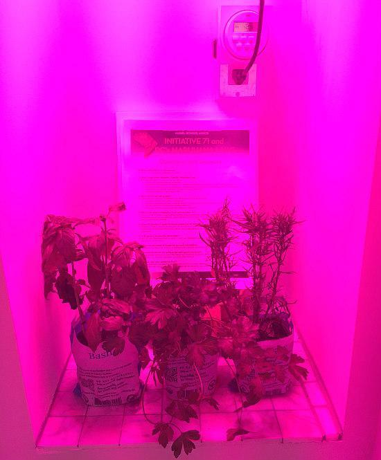 Marijuana grow closet in a Washington, D.C. condo. Image via dc.urbanturf.com
