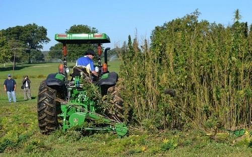 A tractor cuts a small plot of hemp at a University of Kentucky research plot near Lexington. Image: Dylan Lovan, Associated Press via Washingtonpost.com