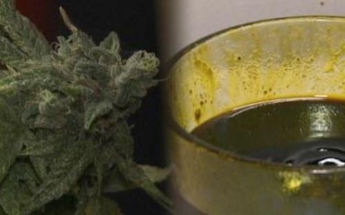 Marijuana is used to make cannabidiol oil, which is used for medical purposes in the states that allow it. Image:  WXIA-TV, Atlanta