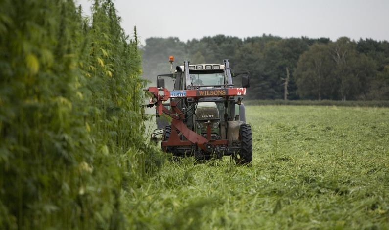 Image of industrial hemp farming