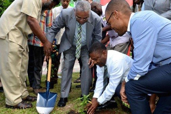 Image of Jamaican officials planting the first legal marijuana plant