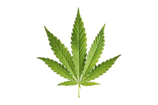 Image of marijuana leaf