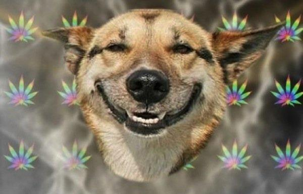 Image of a high dog
